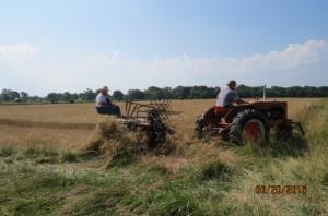 2016 Wheat Harvest (1)