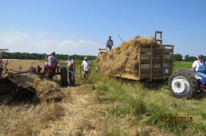 2016 Wheat Harvest (3)