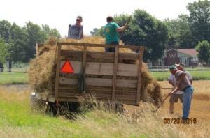 2016 Wheat Harvest (4)