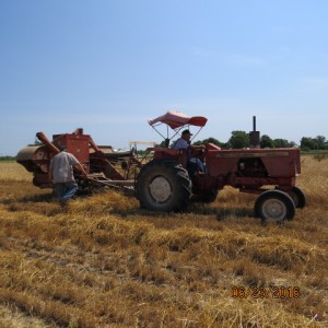 2016 Wheat Harvest (8)